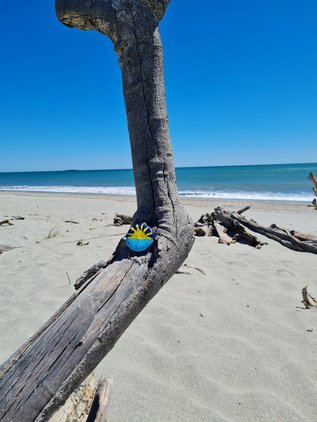 Haast beach1.jpg