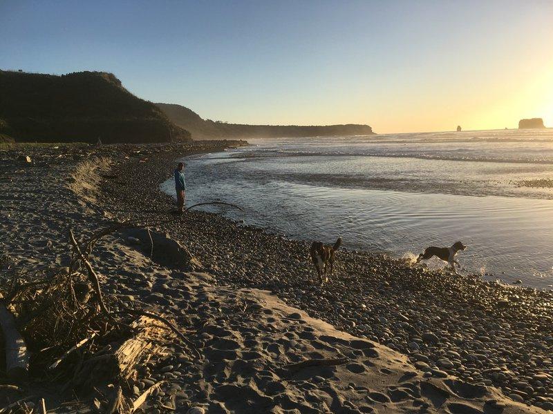 Layla - beach and dogs.jpeg