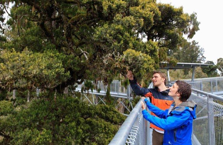 West Coast Treetop Walk & Cafe