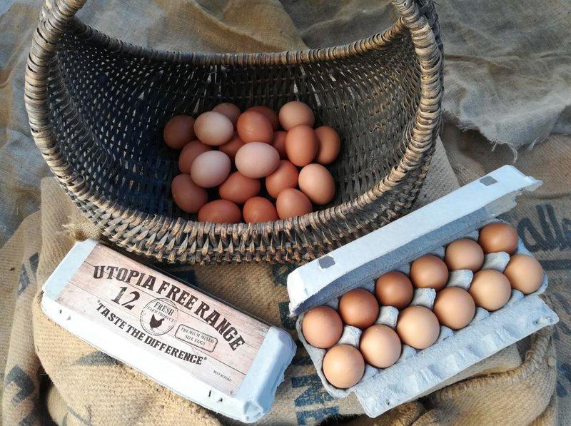 Utopia eggs.JPG