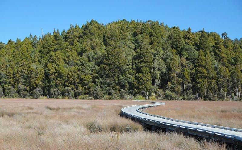 Wetland walk Okarito.JPG