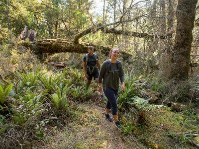 Haast World Heritage Area walks