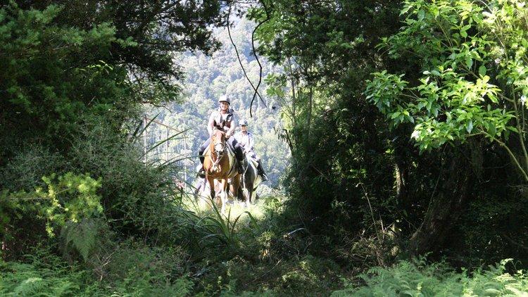 Horse trek through native bush