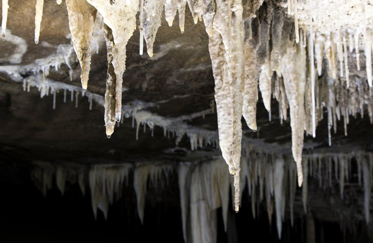 Amazing stalactite formations on the roof of the Metro Cave near Charleston on the West Coast