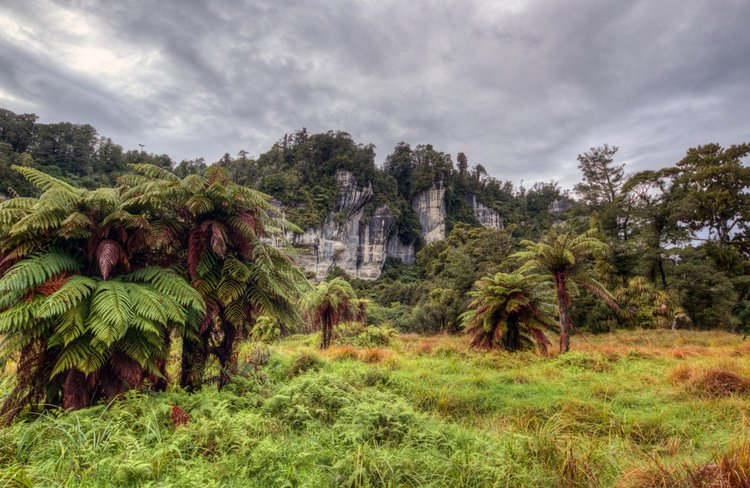 Views of the stunning Nile River limestone bluffs from the Rainforest Train, Charleston, West Coast