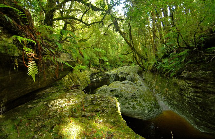 Oparara Wilderness