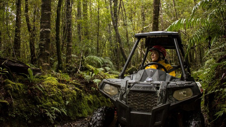 Visually stunning views through 250 acres of privately owned rainforest