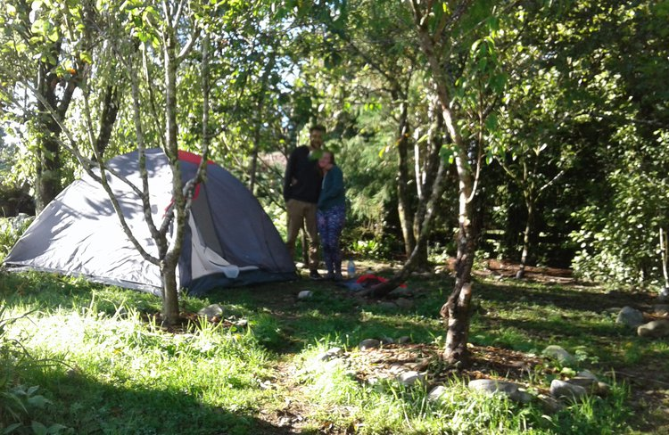 Orchard camping