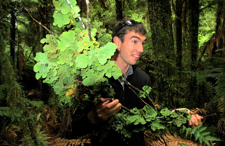 Join expert naturalist guides to discover a world of giant rainforest trees, rare wildlife and delicate ferns and mosses.