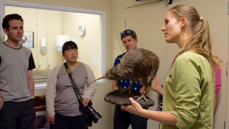 Our Wildlife Husbandry Manager ( Laurie ) taking a VIP Backstage pass Tour.